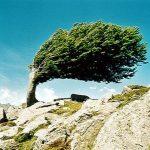 boom gevormd door wind